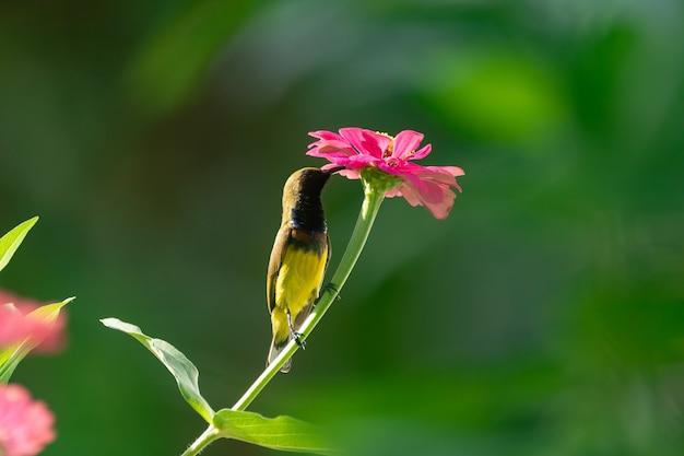 꽃에 올리브 백업 sunbird