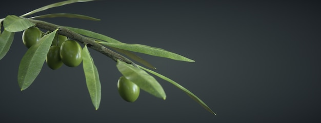 Olive branch on dark, with olives and leaves
