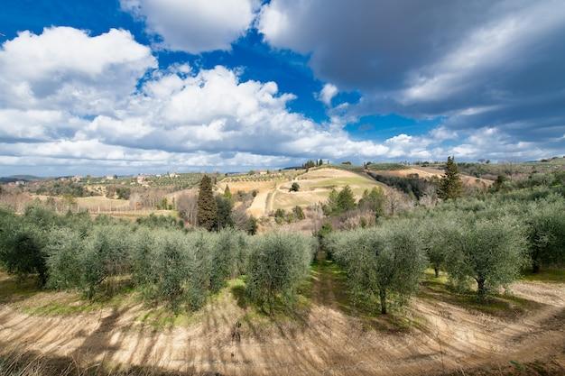 イタリア、トスカーナのキャンティ渓谷のオリーブ畑とブドウ畑