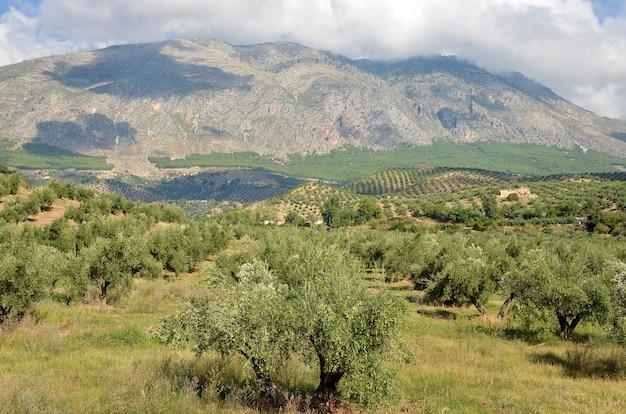 アンダルシアのハエンとシエラマヒナのオリーブ畑