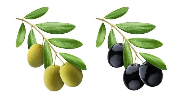 Ветка оливкового дерева, зеленые и черные оливки с листьями, изолированными на белом фоне с обтравочным контуром, коллекция