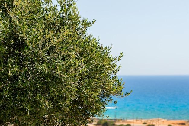 해변에서 올리브 나무