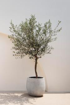 Оливковое дерево со средиземноморской минималистичной внешней архитектурой стен