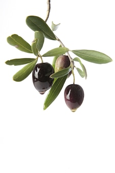 Olives oozing pure extra virgin olive oil symbol of ecological production