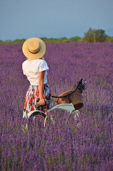 보라색 라벤더 밭에 빈티지 자전거가 있는 오만