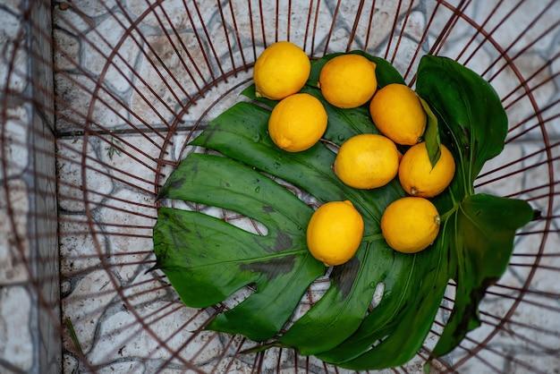 큰 시든 녹색 몬스 테라 잎에 노란색 레몬이 철 바구니에 놓여 있습니다. 축제 박람회 장식. 장식 요소, 과일 저장. 공간 복사