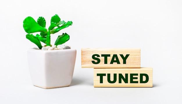 明るい背景に、鉢植えの植物と2つの木製ブロックに「staytuned」というテキストが表示されます