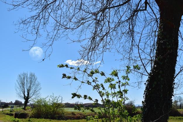 完璧な春の日に月は夢のような雰囲気を与えます