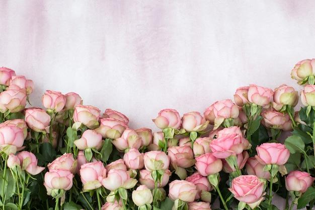На розовом фоне в ряд выложены розовые розы