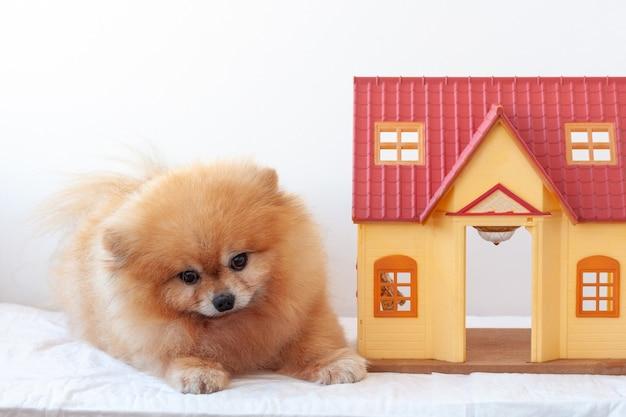 白い背景にポメラニアンの赤い小さな犬の隣に小さな家があります。