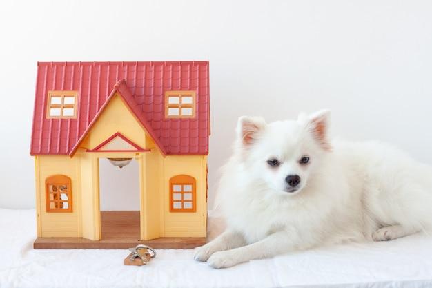 白い背景に白い小さな犬ポメラニアンの隣に小さな家があります。