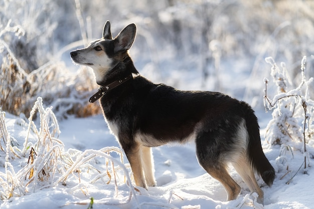 겨울 아침 산책에서 개는 주인을보기 위해 멈췄습니다.