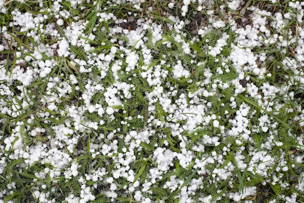 緑の草の上に雹があります。夏の小さな流氷
