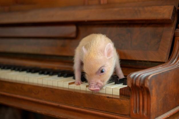 На клавишах коричневого деревянного пианино есть милая маленькая розовая мини-свинья. закрыть