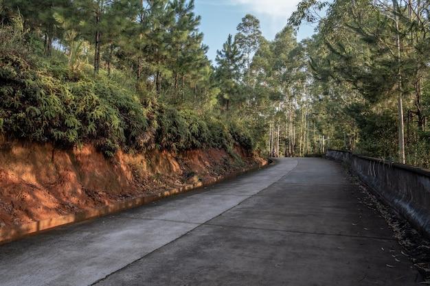 朝の山道で森から道に太陽が差し込む