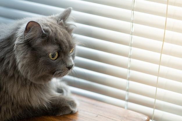На диване сидит кот и на что-то смотрит