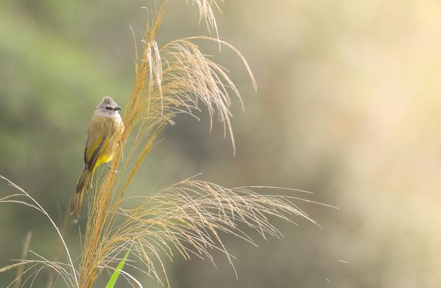 緑の自然と木の枝にonせたヒヨドリ
