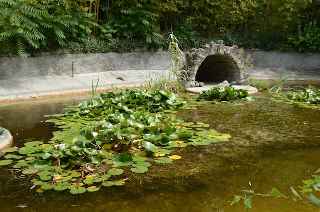 Ond overgrown with water lilies with figures of turtles and birds.
