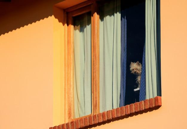 Один очаровательный коричневый щенок остается в доме, глядя на улицу