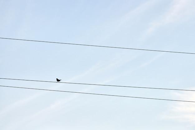 Одна птица на проводе