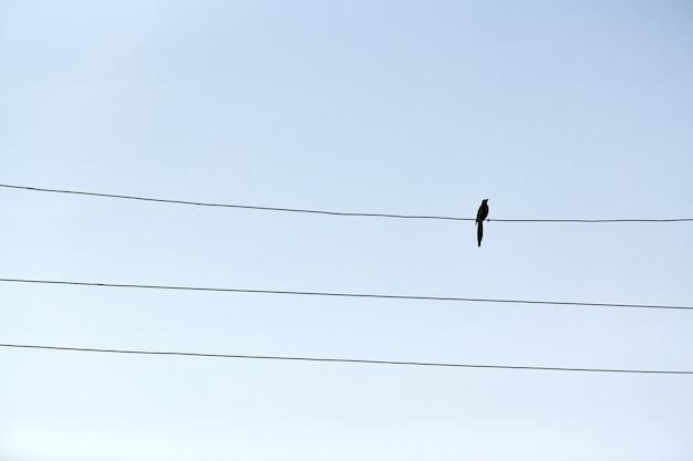 One alone bird on wire