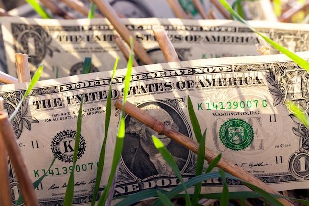 Один американский доллар в сельскохозяйственном поле, крупный план