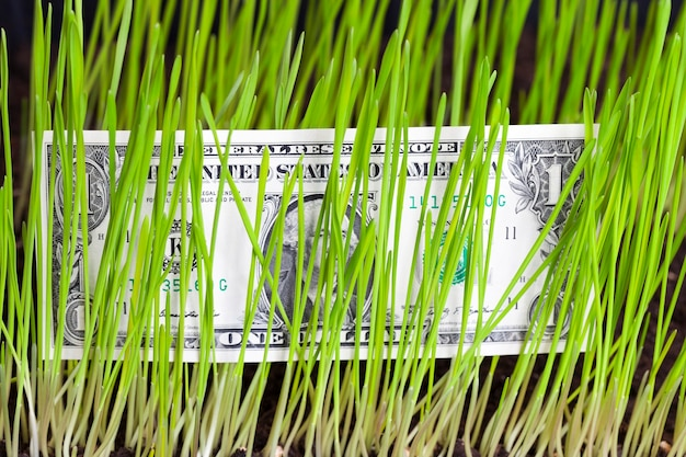 One american dollar lying behind or between the green stalks of wheat and grass, closeup