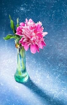 影のあるモダンなトレンディなスタイルの青いテクスチャ背景にガラスグリーンの花瓶の1つの美しい優しいピンクの牡丹。母の日や女性の休日のための花とお祝いのグリーティングカード。縦の写真。