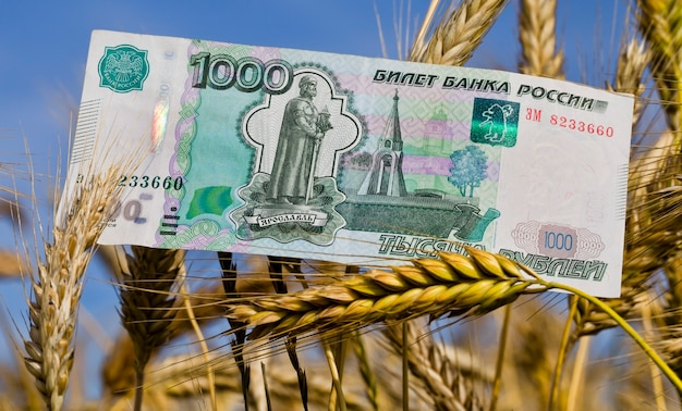 Один красивый новый российский рубль на спелой пшенице, бизнес о сельском хозяйстве в сельской местности, крупный план
