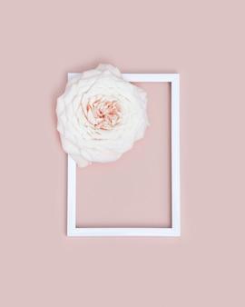 흰색 프레임 하나의 아름다운 흰 장미 꽃