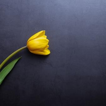 Один красивый желтый тюльпан крупным планом на фоне темно-сине-серой лепной стены.