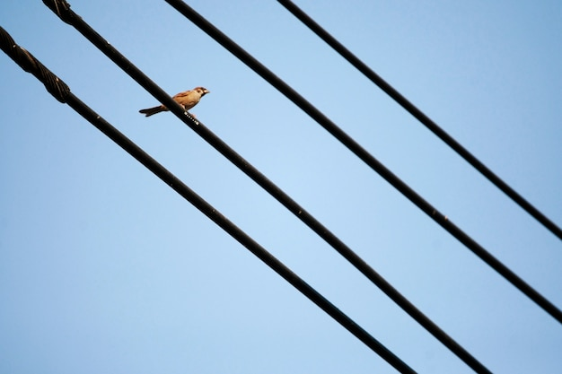 One bird perched on an electrical line with blue sky