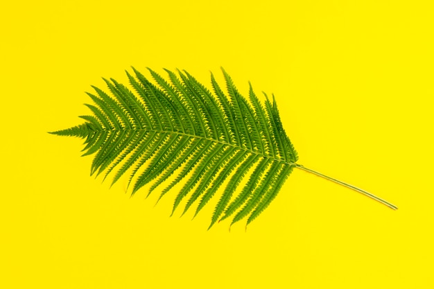 One branch of a fern or palm tree on a yellow background. concept of the tropics. flat lay, top view