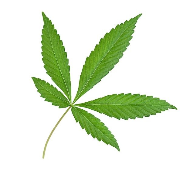 1つの大麻の葉は孤立した白い背景