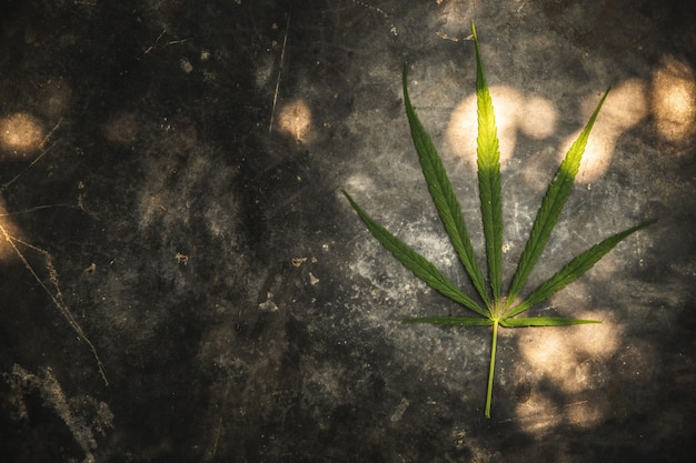 One cannabis leaf on the cement ground