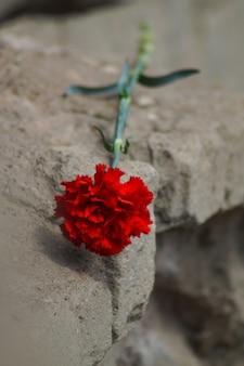 Одна гвоздика расположена на гранитных ступенях мемориала. память и патриотизм. крупный план. дневной свет