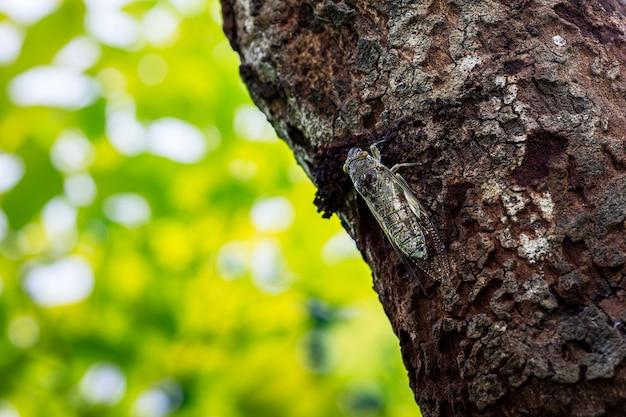 나무에 매달린 매미 한 마리와 흐릿한 배경