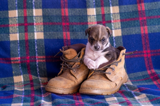 One cute puppy sitting in winter boots in the sun