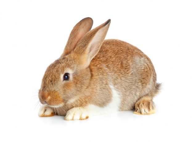 One cute rabbit sitting