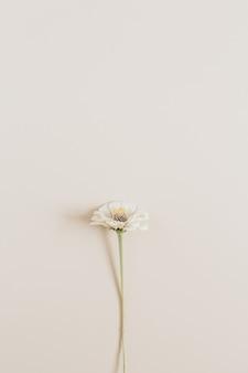 베이지 색 표면에 하나의 냉소주의 꽃