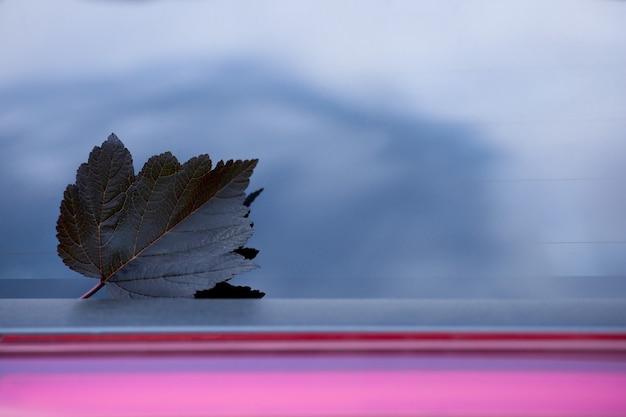 車のガラスの1つの暗い秋の葉