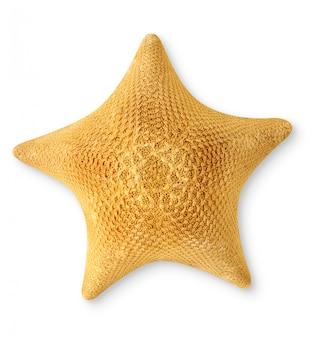 白い背景に、平面図上で分離1つの乾燥した海の星