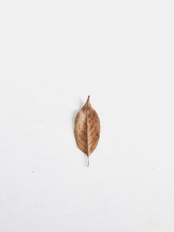 1 つの乾燥した秋の葉は、白い背景で隔離。フラットレイ、トップビュー