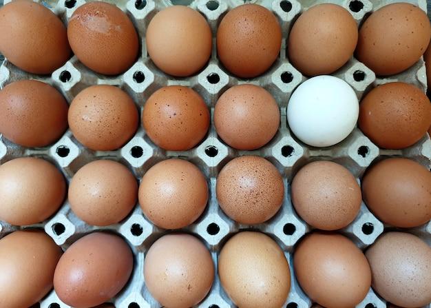 Одно утиное яйцо среди множества свежих куриных яиц на упаковке концепция успеха в бизнесе