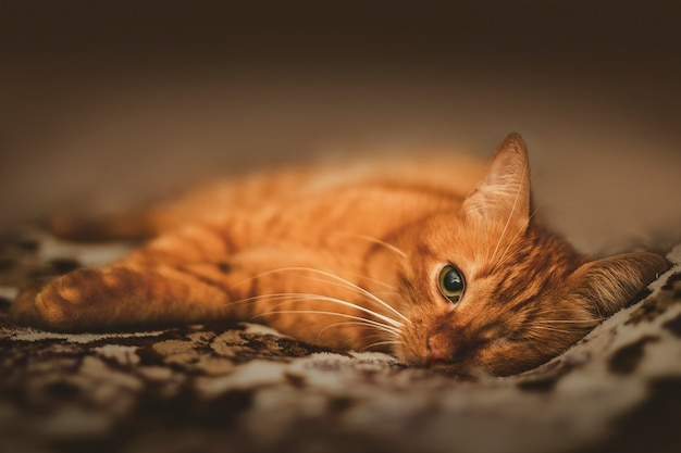 One-eyed adorable ginger cat