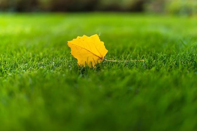 푸른 잔디의 배경에 하나의 떨어진 된 노란 잎