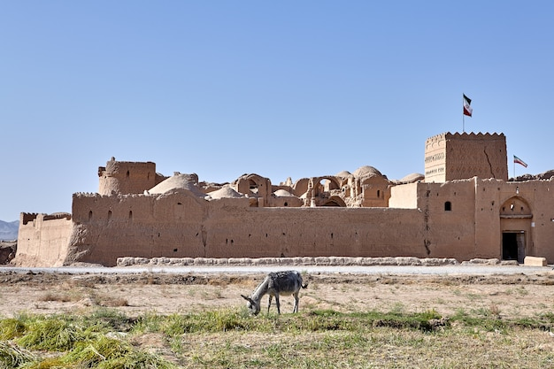 One farmer burro grazing near antique fortress saryazd, iran.