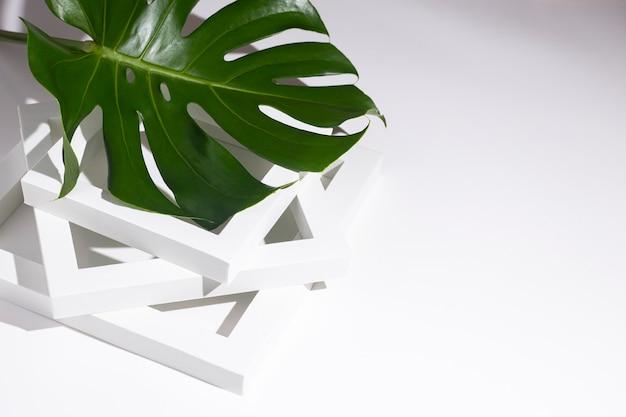 Один свежий тропический зеленый лист монстеры лежит на белых рамах подиума на белом фоне.