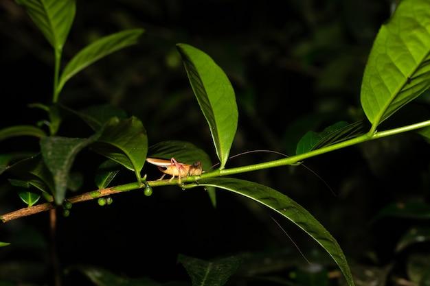 Один кузнечик на листе куста