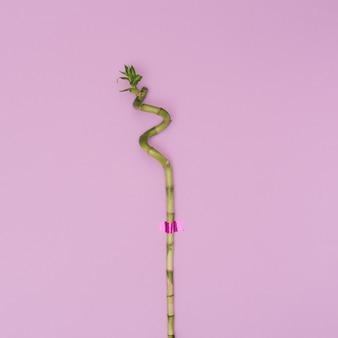 明るい紫色の背景に1本の緑の竹の棒。最小限の構成。